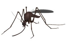 3d render of mosquito Stock Images
