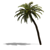 3D Render of a palm tree Royalty Free Stock Photo