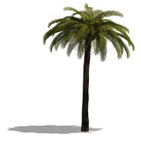 3D Render of a palm tree Stock Images
