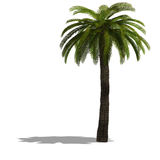 3D Render of a palm tree Stock Photography