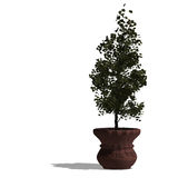 3d render of a planted tree Royalty Free Stock Photography