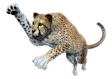 Free 3D Rendering Big Cat Cheetah On White Stock Photo - 219941890