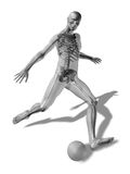 3D rendering of a man about to kick a ball. With the skeleton visible through a transparent body Royalty Free Stock Photography