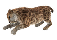 3D Rendering Sabertooth on White Stock Photo