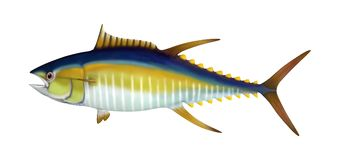 3D Rendering Yellowfin Tuna on White Stock Image