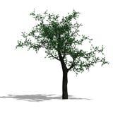 3D rendono di un albero del broadleef royalty illustrazione gratis