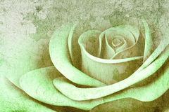 3D Rose. Colors on texture background Royalty Free Stock Photos