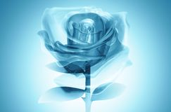 3D rose glass blue Stock Image