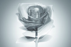 3D rose glass gray Royalty Free Stock Photo