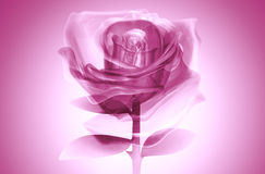 3D rose glass pink. Rose glass pink on background. illustration 3d model Royalty Free Stock Photos