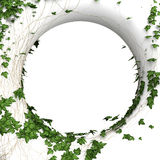 3d round wall frame. 3d round ivy wall  frame background Royalty Free Stock Photography
