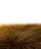 3D savanna grass Royalty Free Stock Photos