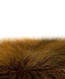 3D savanna grass Royalty Free Stock Photos