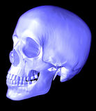 3d Scull Stock Afbeelding