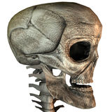 3D skull. 3D big realistic skull isolated on white Stock Photo