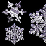 3d snowflakes. Set on the black background Royalty Free Stock Image