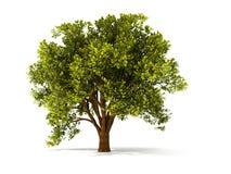3d summerl drzewo Obraz Stock