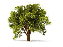 3d summerl tree. Isolated summer tree with red foliage Stock Image
