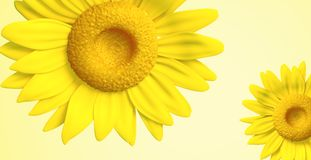 3D sunflower Royalty Free Stock Photos