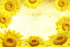 3D sunflower. Frame on background, illustration Royalty Free Stock Photos