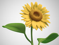 3D sunflower Stock Photos
