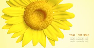 3D sunflower and background Royalty Free Stock Images