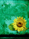 3D sunflower and background. 3D Sunflower on texture color background Stock Photos