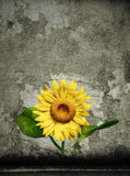 3D sunflower and background Royalty Free Stock Photo