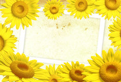3D sunflower frame. On background, illustration Royalty Free Stock Photography