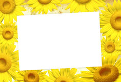 3D sunflower frame. On background, illustration Royalty Free Stock Photo
