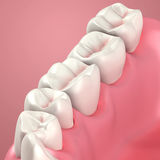 3D teeth or tooth close up. Illustration Stock Photography