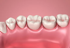 3D teeth or tooth close up Stock Photography