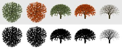 3D Tree collection 01. Some views of tree render for 2D visualisation vector illustration