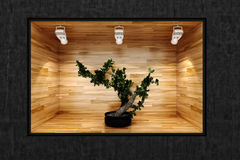 3d tree in a presentation show case Royalty Free Stock Images