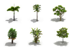 3d trees pack with shadows Stock Photography
