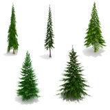 3d trees pack on white background Royalty Free Stock Images