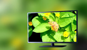 3d tv green background. The insect in 3d tv green background Stock Image