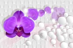 Free 3d Wallpaper, Orchid On White Abstract Background. Stock Images - 130813304