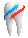 3d white tooth icon - Blue and red arrow. 3d rendered photo-realistic white tooth with blue and red semi-transparent arrows - Isolated icon on white background Stock Photos