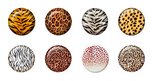 3d wild buttons. Eight African wild animal skins in 3d button Stock Image