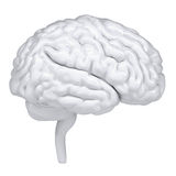 3d witte menselijke hersenen. Een zijaanzicht Royalty-vrije Stock Afbeeldingen