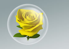 3D yellow rose in glass ball. Yellow rose in glass ball model 3D. illustration on background Royalty Free Stock Image