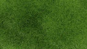 3d zielonej trawy tła tekstura. Zdjęcie Royalty Free