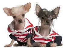 4个中国有顶饰月小狗 免版税库存照片