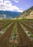 4个农厂场面 免版税库存图片