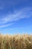 4个域黑麦 免版税库存照片