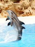 4个显示海豚 库存照片