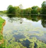4个池塘春天 免版税库存图片