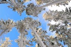 4个没有多雪的结构树 免版税库存照片