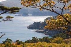 4个海岸线结构树 库存图片